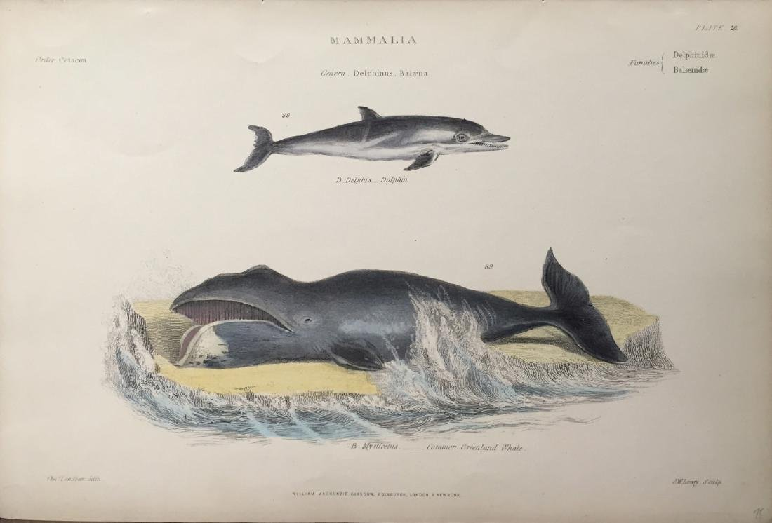 William Mackenzie: Marine Print Engraving, 19th C