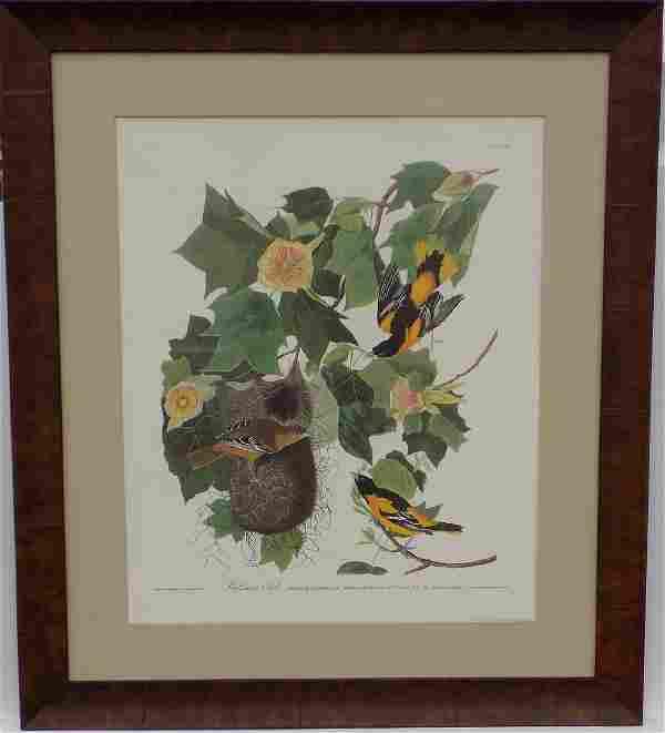 Audubon's Baltimore Oriole Print