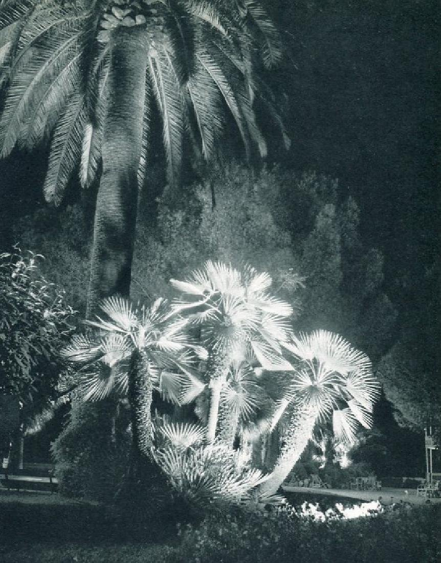 M.B. ARTHAUD - Flood-lit Gardens, Cannes