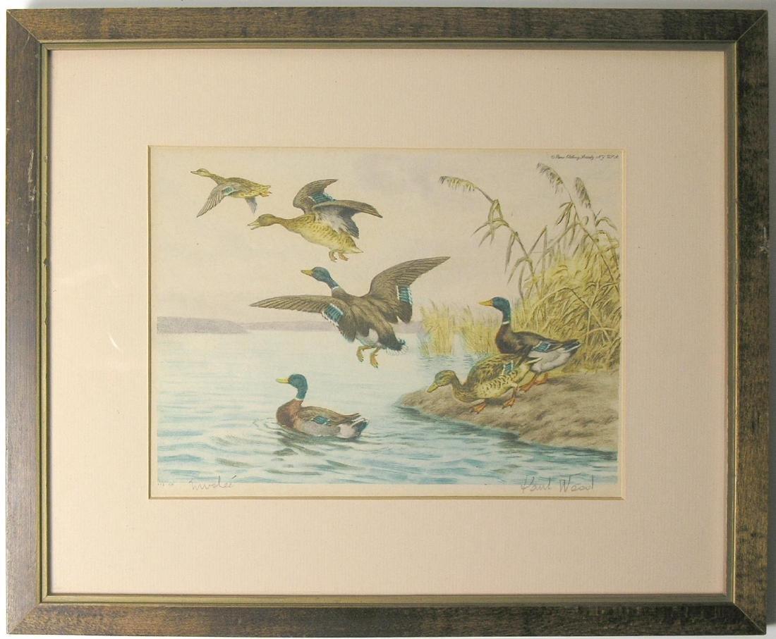 Paul Wood: Ducks