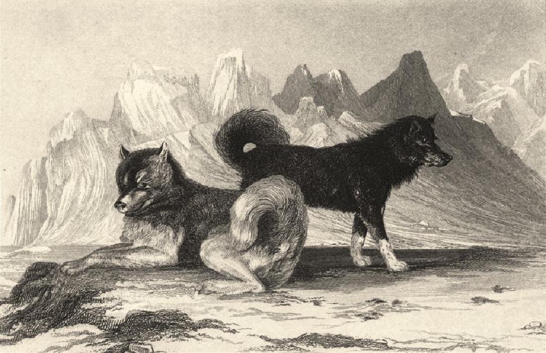 Edward Jesse: Esquimaux Dogs, 1888