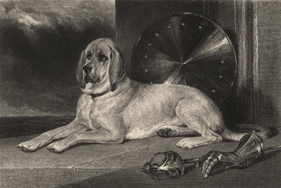 Edward Jesse: Dogs: Marmion, 1888