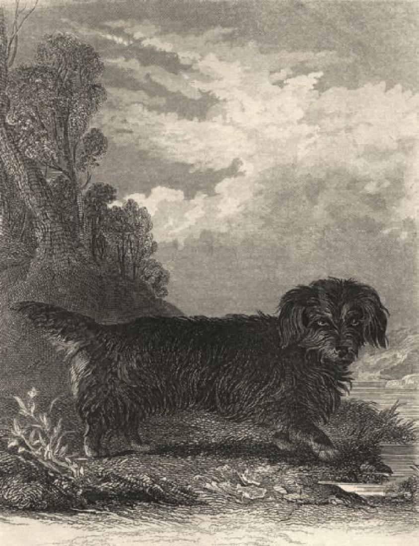 Edward Jesse: Dogs: Otter Terrier, 1888