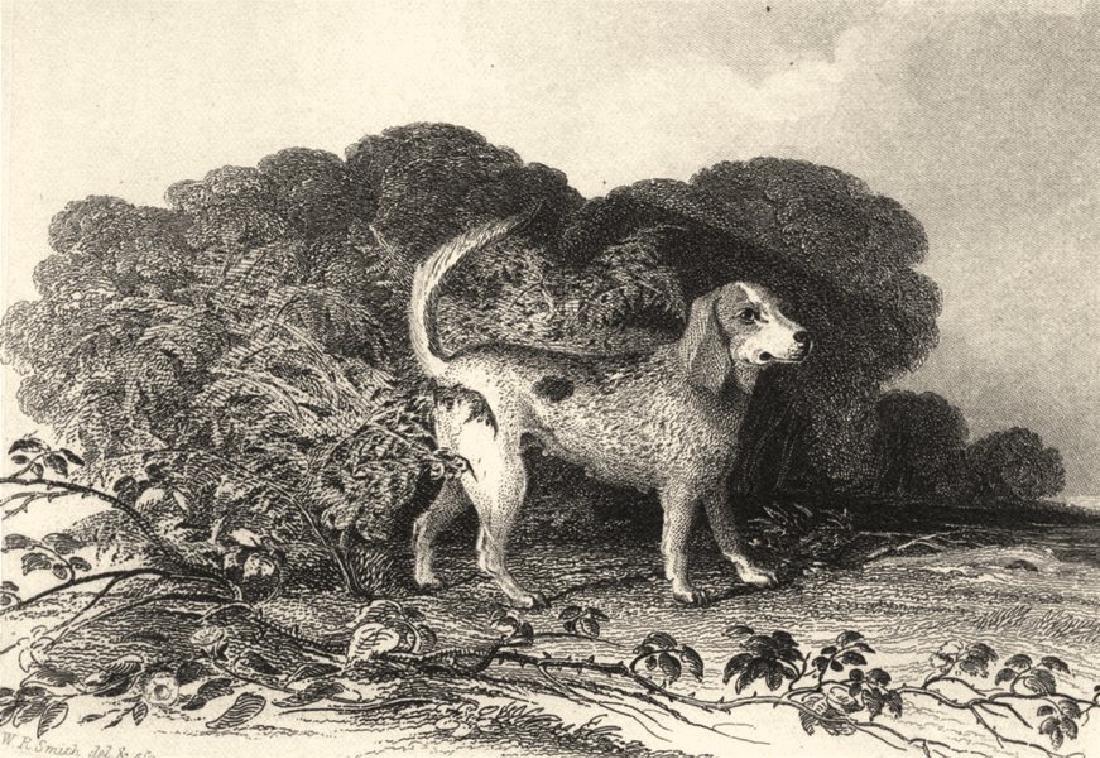 Edward Jesse: Dogs: Beagle, 1888