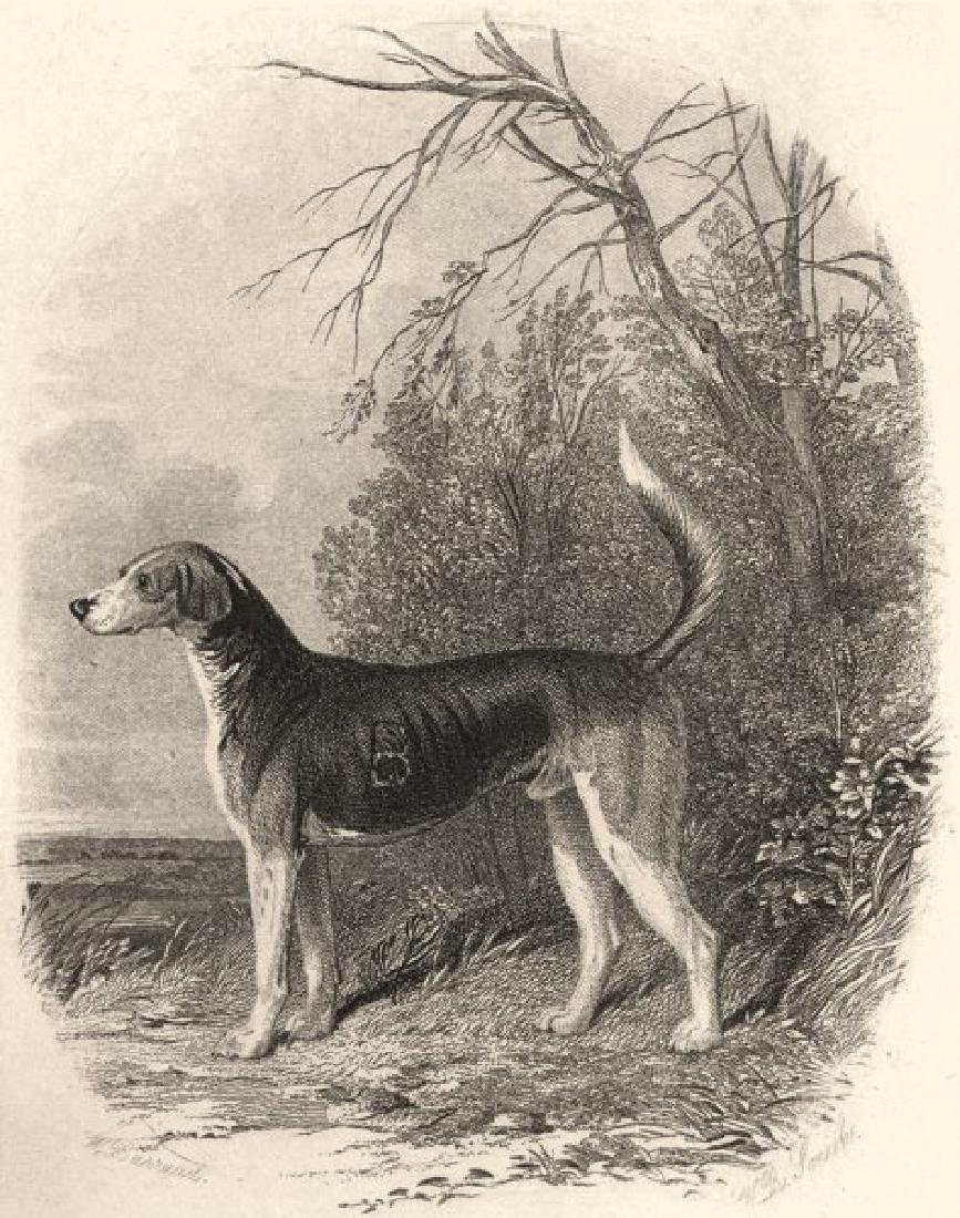 Edward Jesse: Dogs: Fox Hounds, 1888