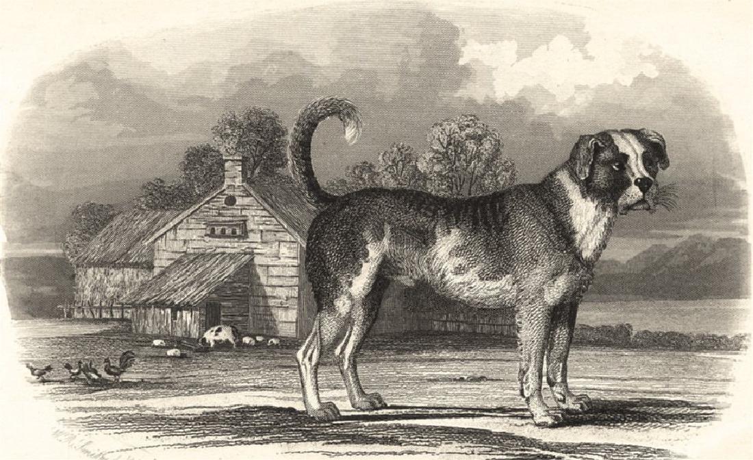 Edward Jesse: Dogs: Mastiff. Farmyward, 1858