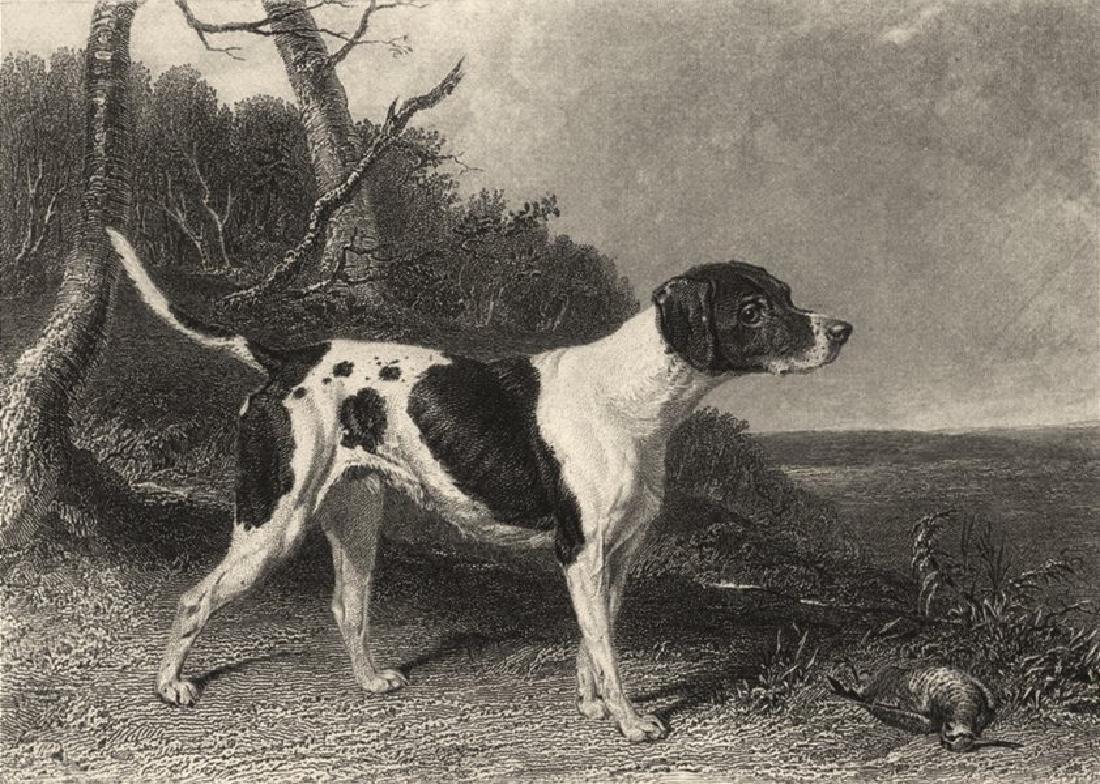 Edward Jesse: Dogs: Pointer, 1888