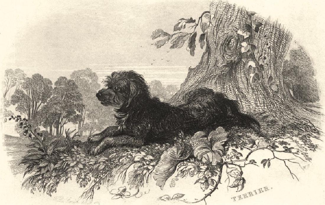 Edward Jesse: Dogs: Terrier. Landseer, 1888