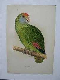 Dufresne's Amazon, 1884