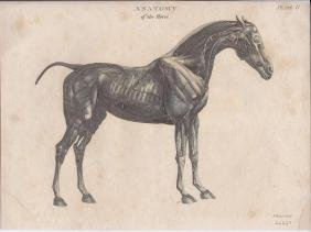 3 Prints: Rees's Anatomy of the Horse, 1808