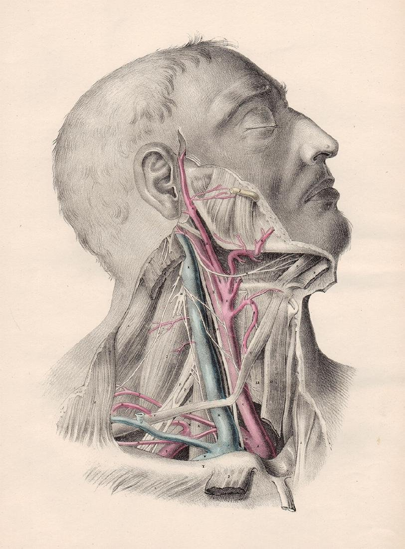 Anatomical drawing by Joseph Maclise, 1870