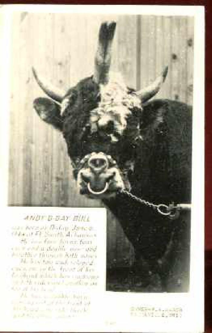 Mutant 4 Eyes 2 Noses Bull Photocard 1953