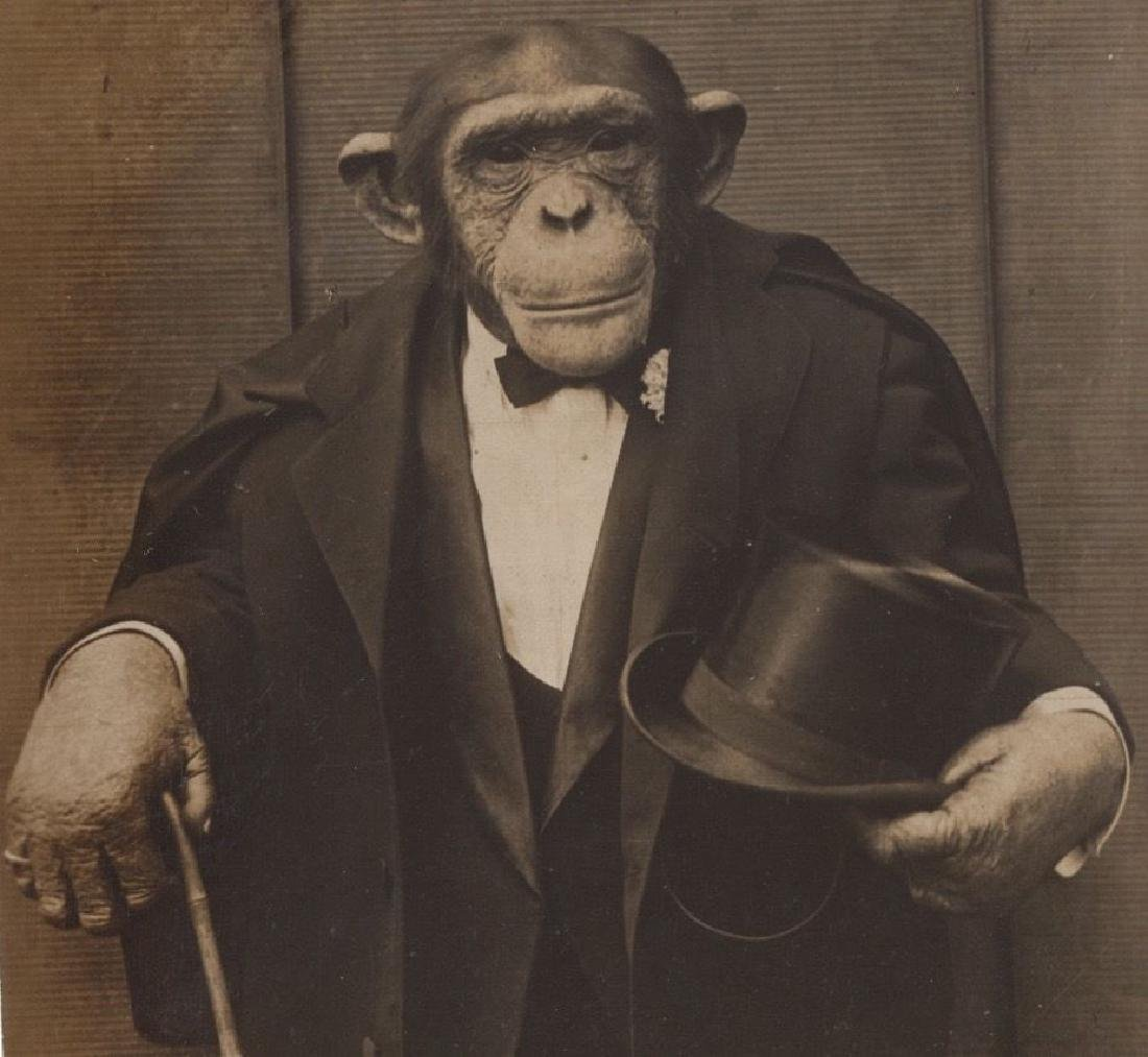 Antique c1915 Vaudeville Dressed Monkey Photo