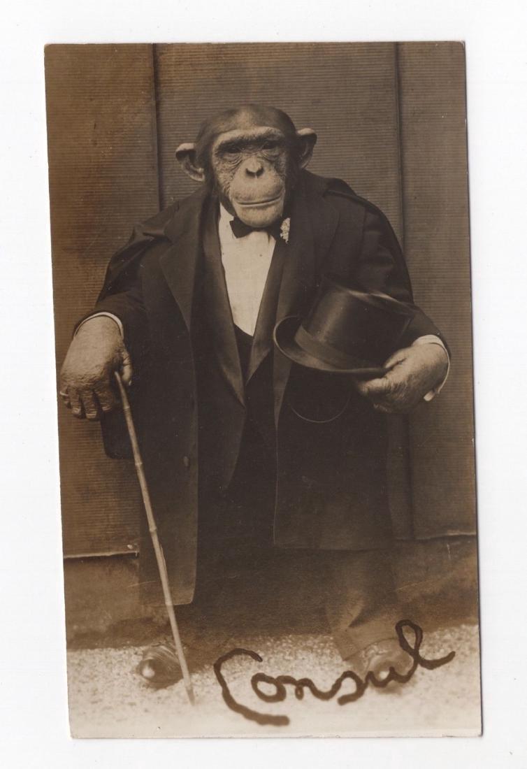 Antique c1915 Vaudeville Dressed Monkey Photo - 3