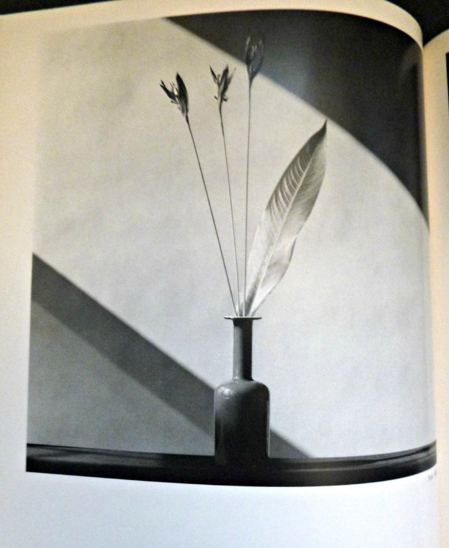 Robert Mapplethorpe, Photographs - 8