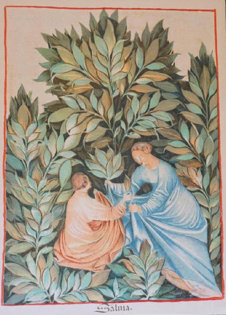 14th Century of Health - Salma Lithograph