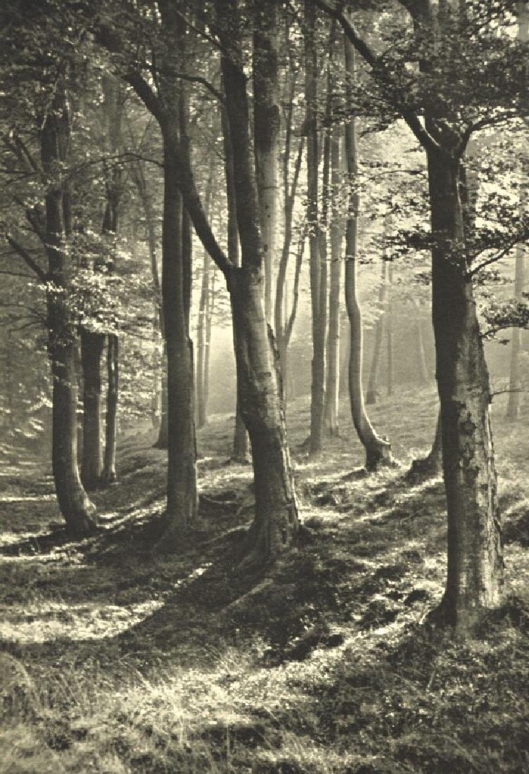 HANS WAGNER - Trees