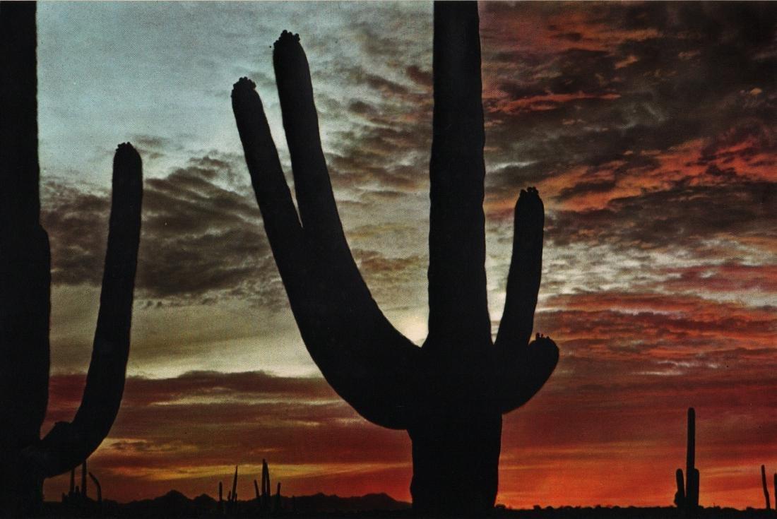 DENNIS STOCK - Sonoran Desert