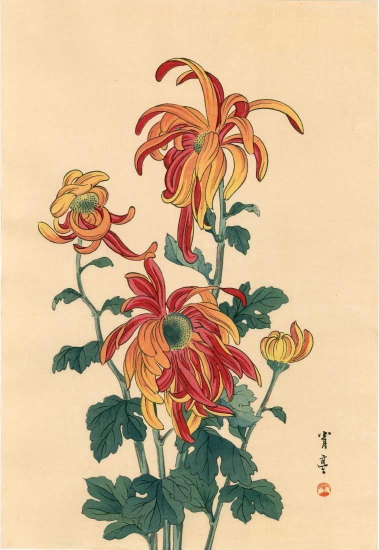 Seitei Watanabe Chrysanthemum Japanese Woodblock Print