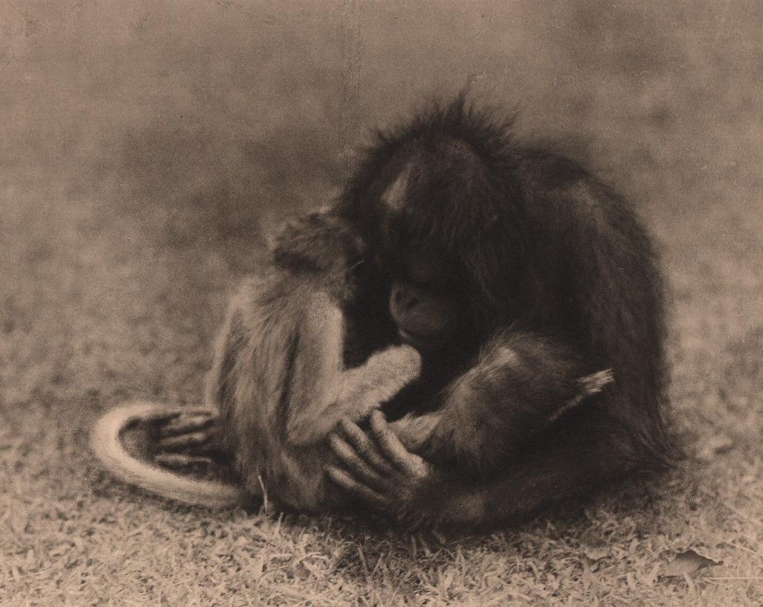 DR. GREGOR KRAUSE - Chimp & Monkey Too