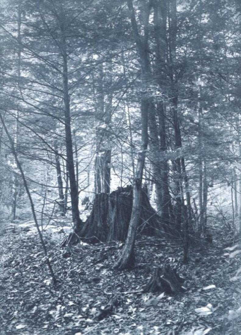 ARTHUR SCOTT - The Haunt of the Ferns