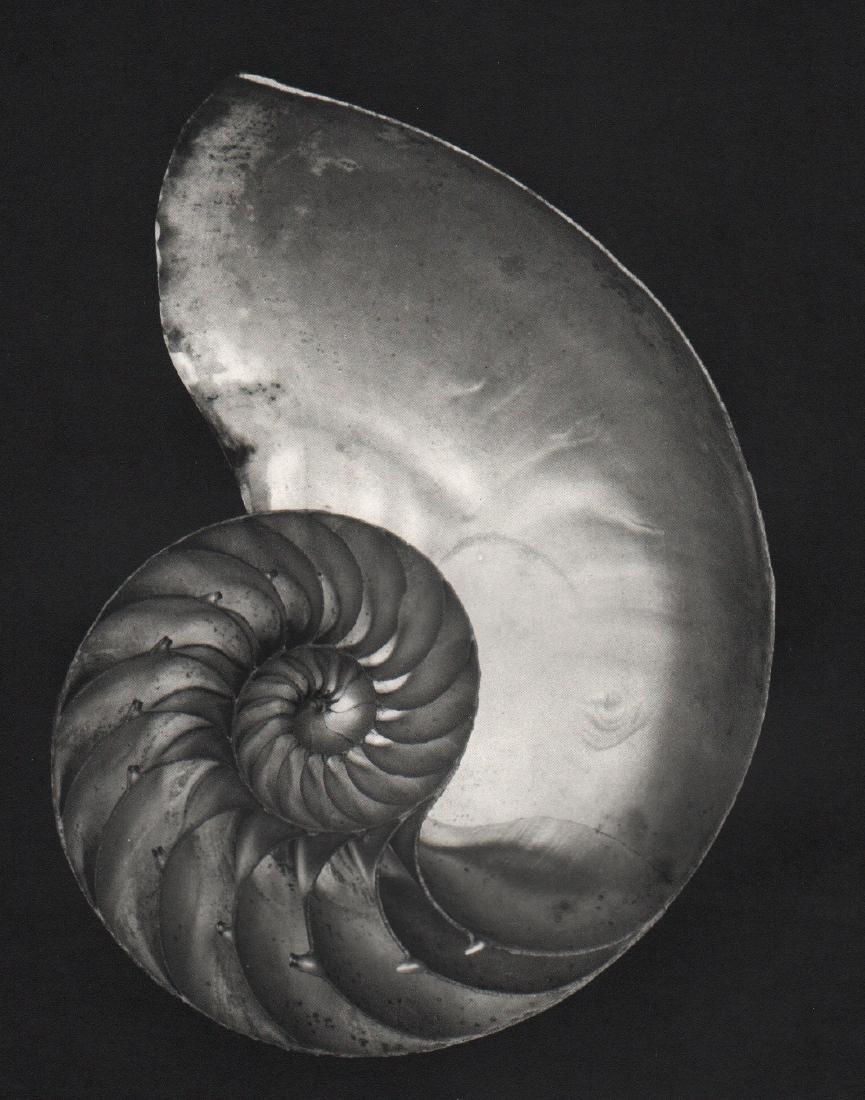 EDWARD WESTON - Nautilus