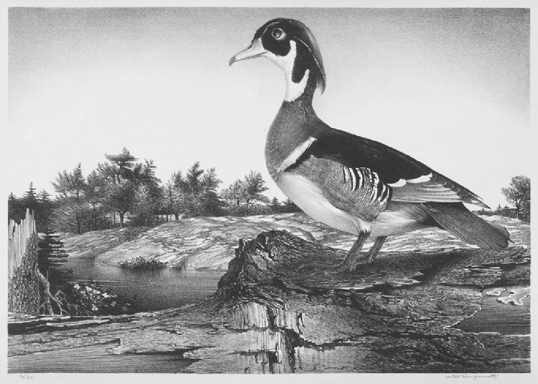 Stow Wengenroth Wood Duck Lithograph