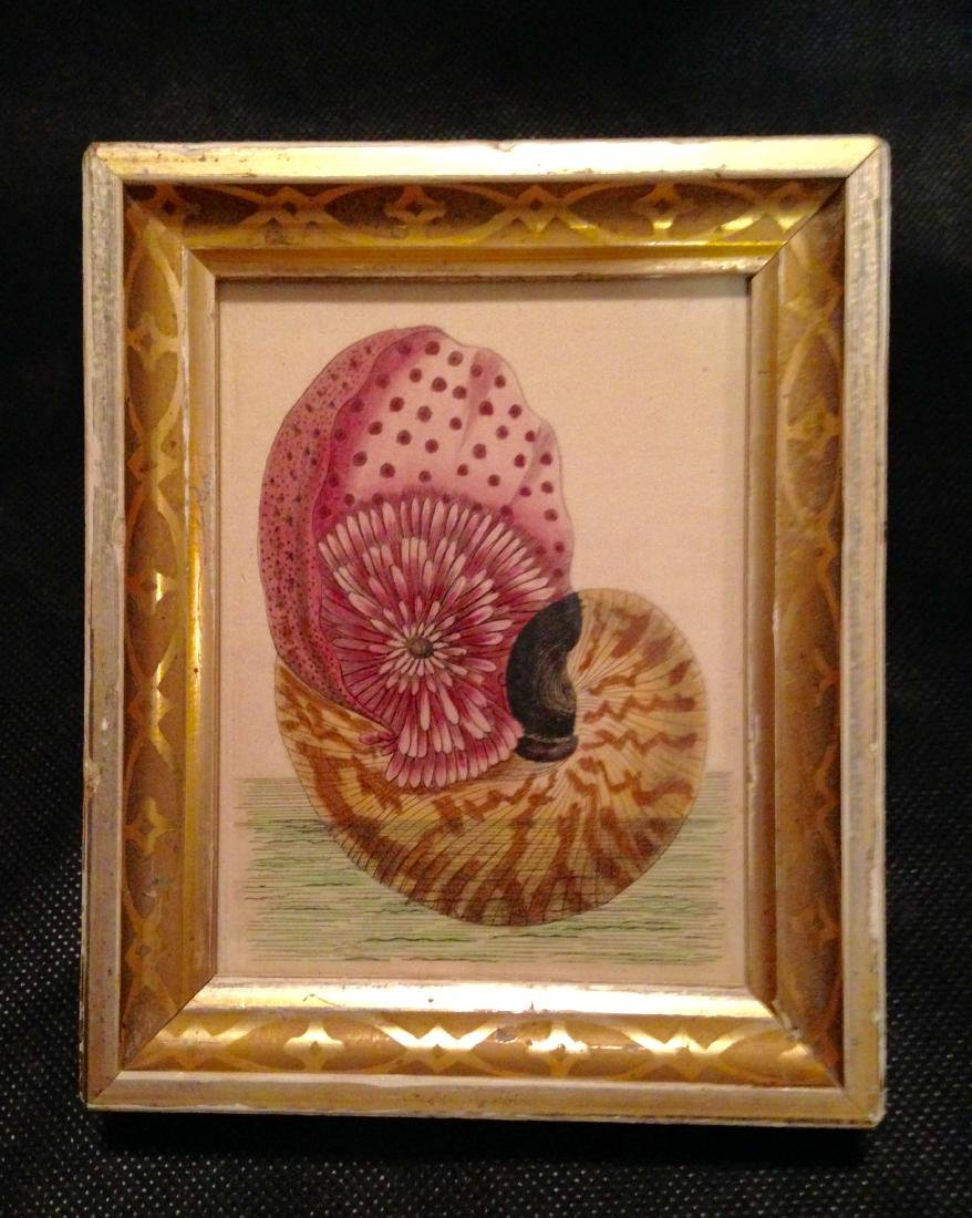 C 1800 Hand Painted Watercolor Engraving of Shell