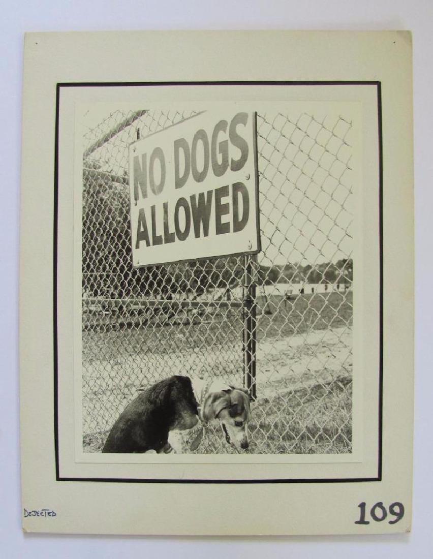 "1972 Art Photo Dog At ""No Dogs Allowed"" Sign"
