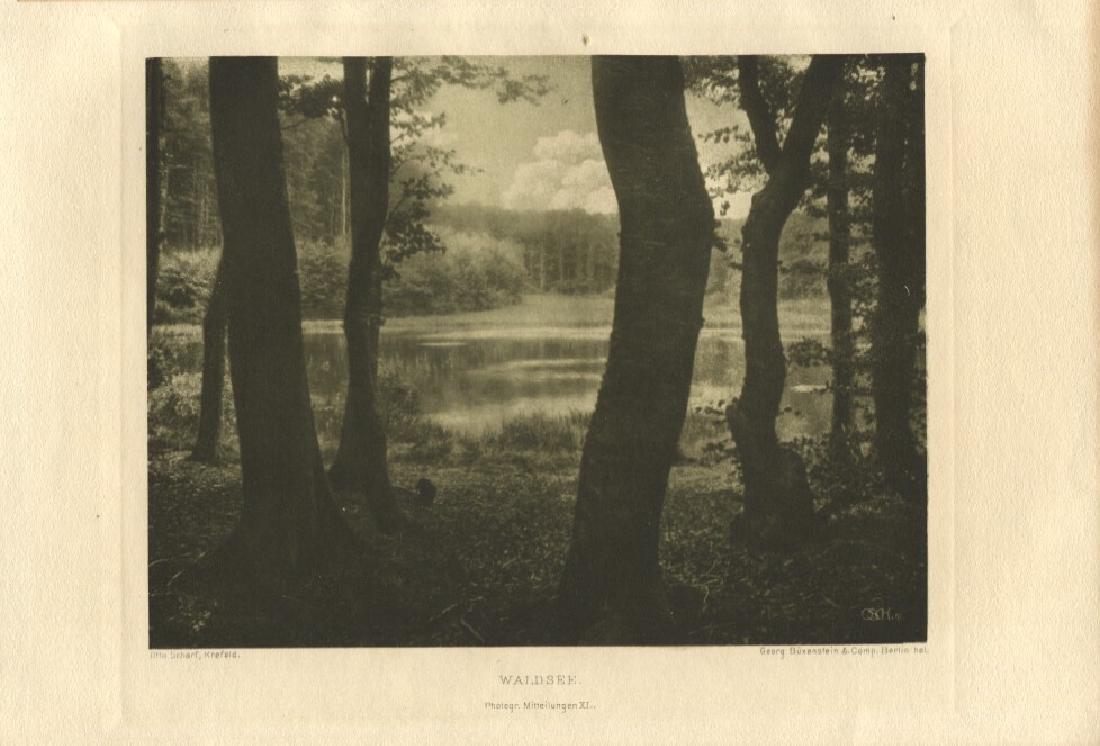OTTO SCHARF - Forest