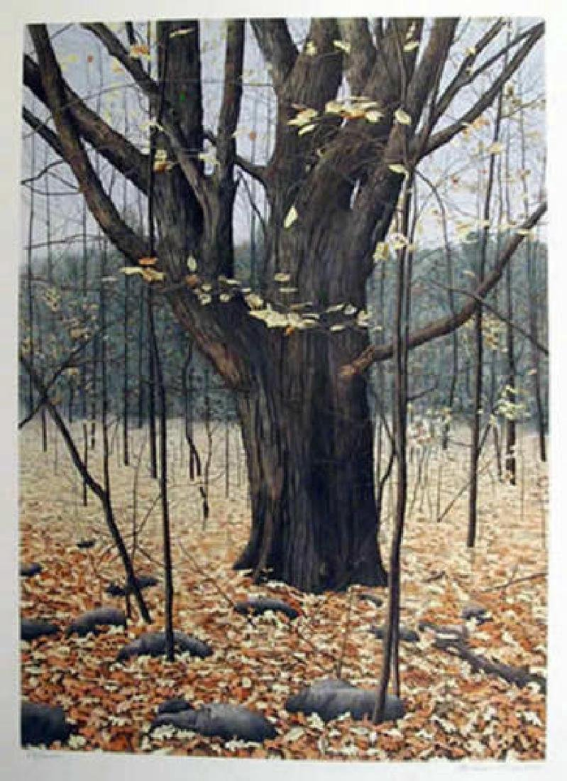 Helen Rundell Limited Edition Lithograph Old Oak