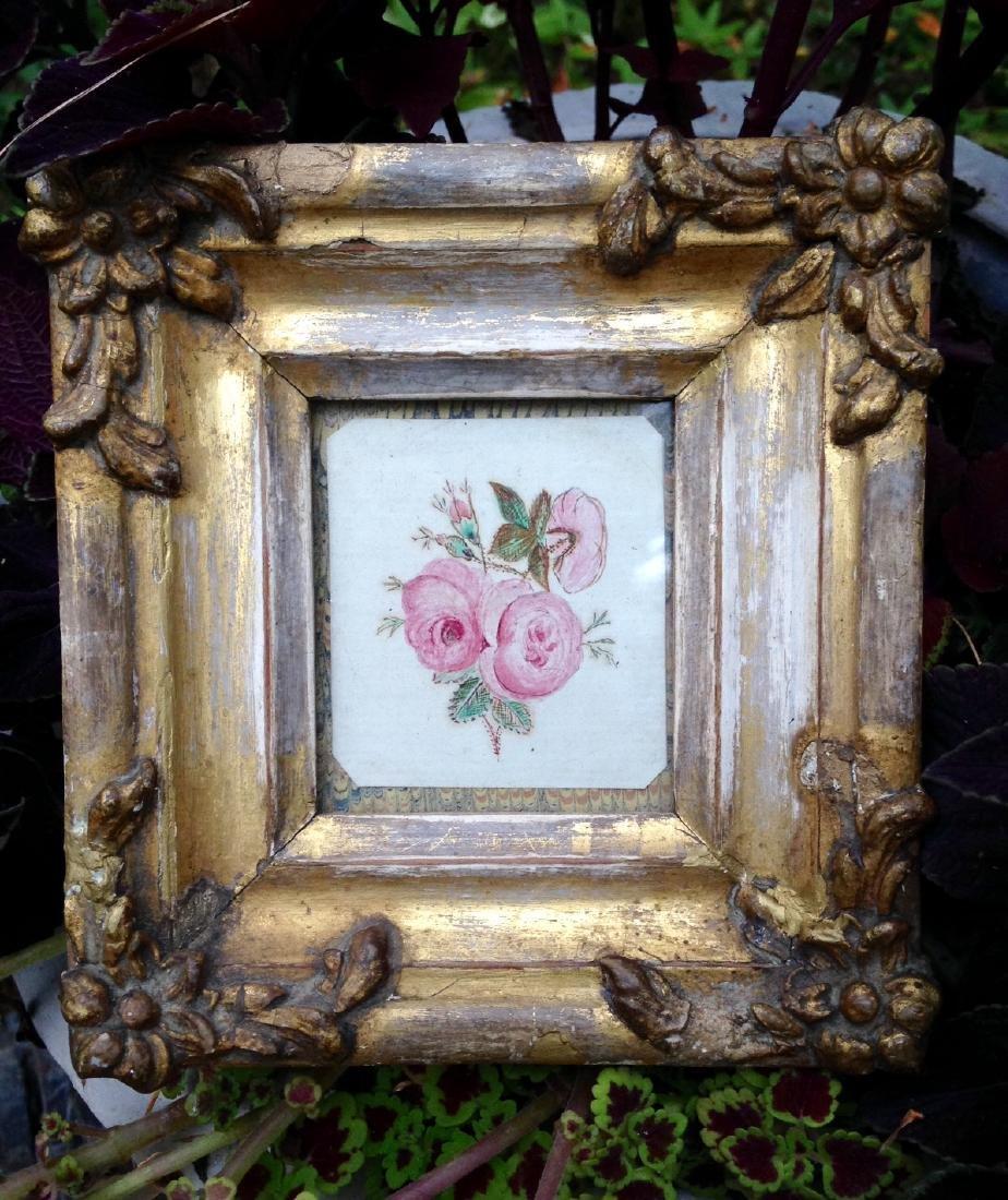 Moss Rose Watercolor 1840s - 2