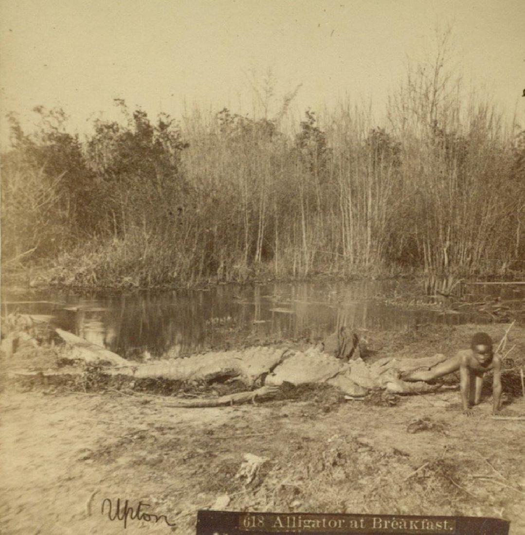 1880 Florida Alligator Bites African American Boy