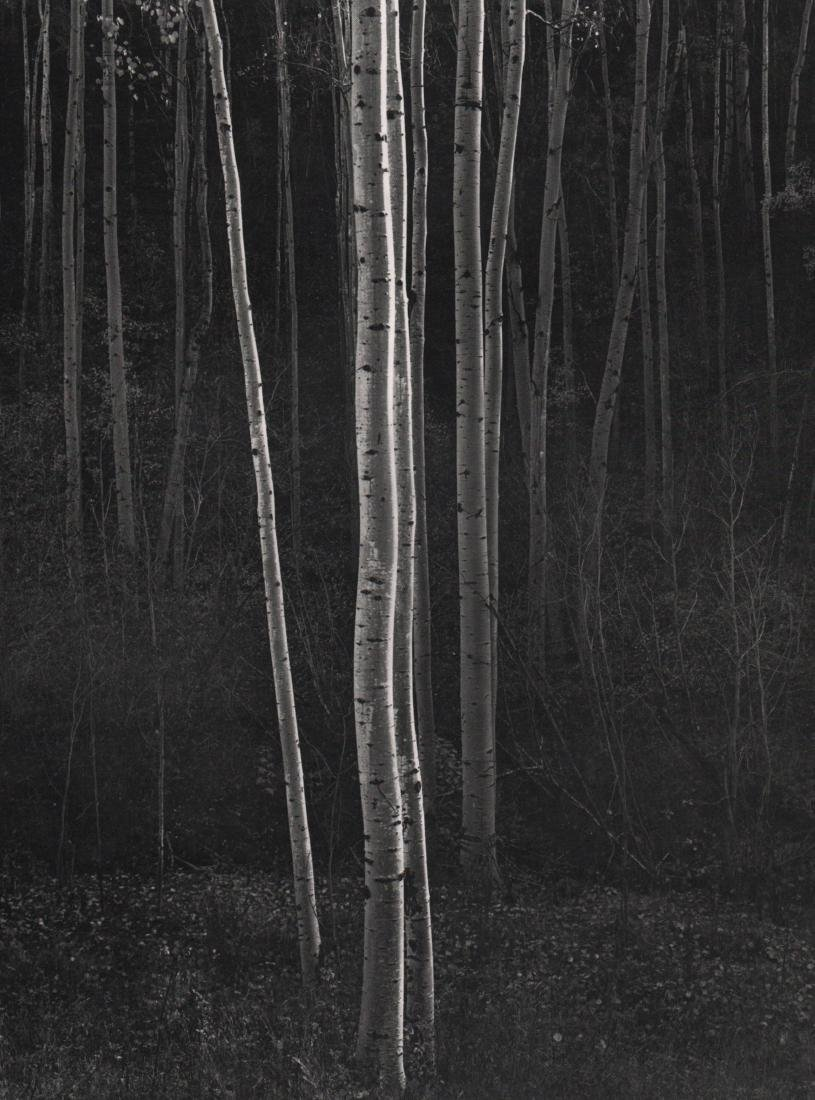 ANSEL ADAMS - Aspens, New Mexico 1958