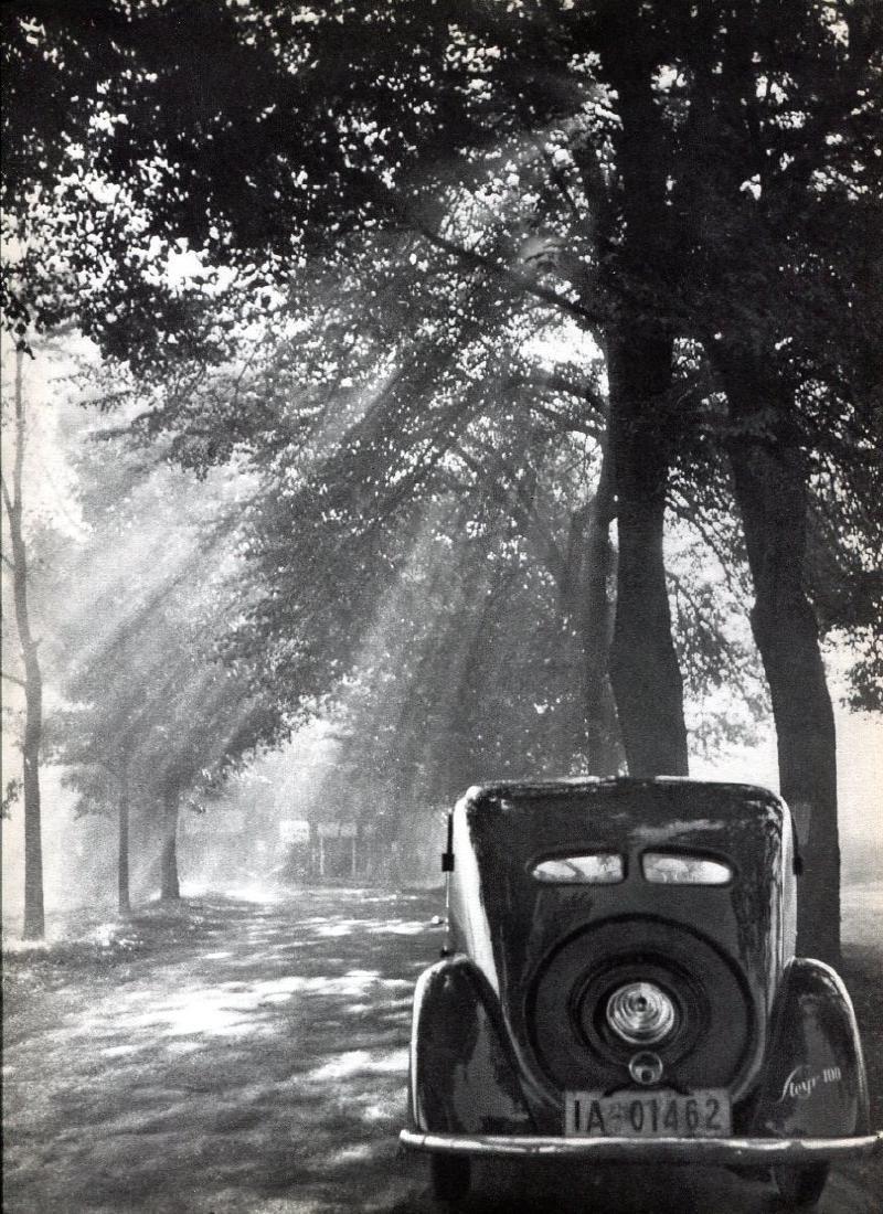 AUGUST RUMBUCHER - Sunlight Through the Trees