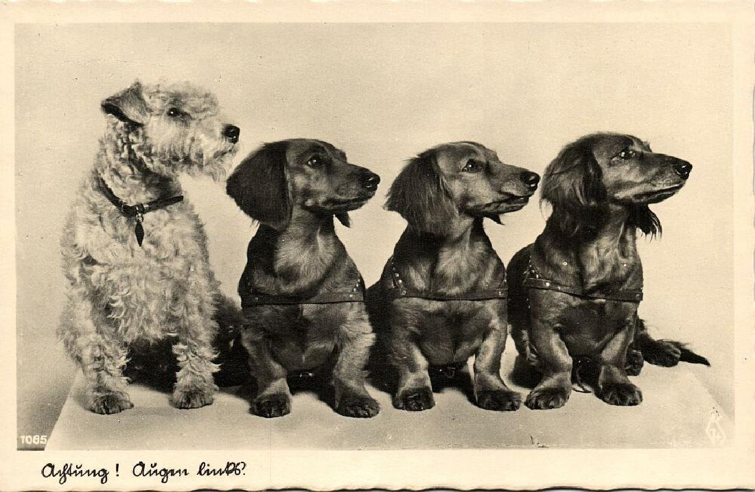 Lot of 10 RPPC Postcards of Dogs 1940s - 10