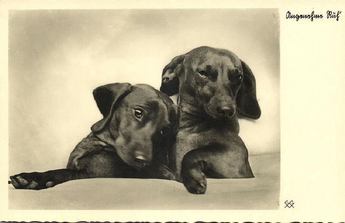 Lot of 10 RPPC Postcards of Dogs 1940s