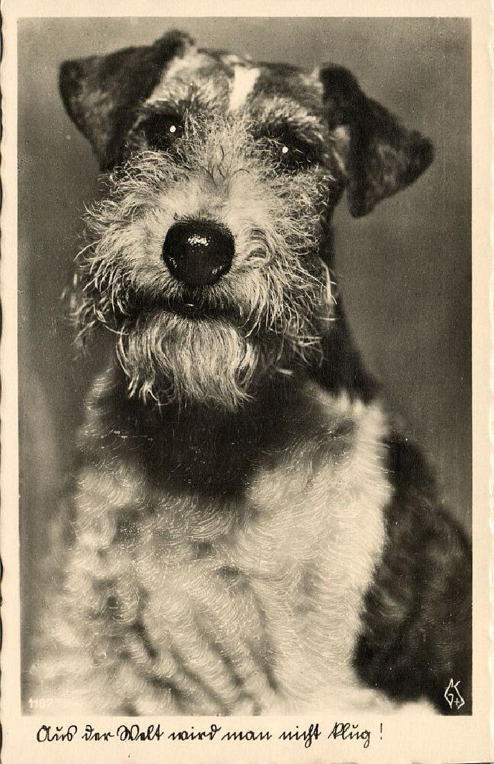 Lot of 10 RPPC Postcards of Dogs 1940s - 4