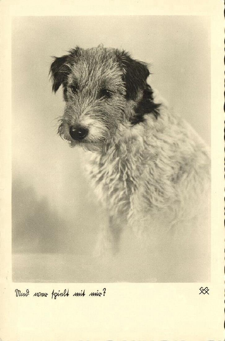 Lot of 10 RPPC Postcards of Dogs 1940s - 8