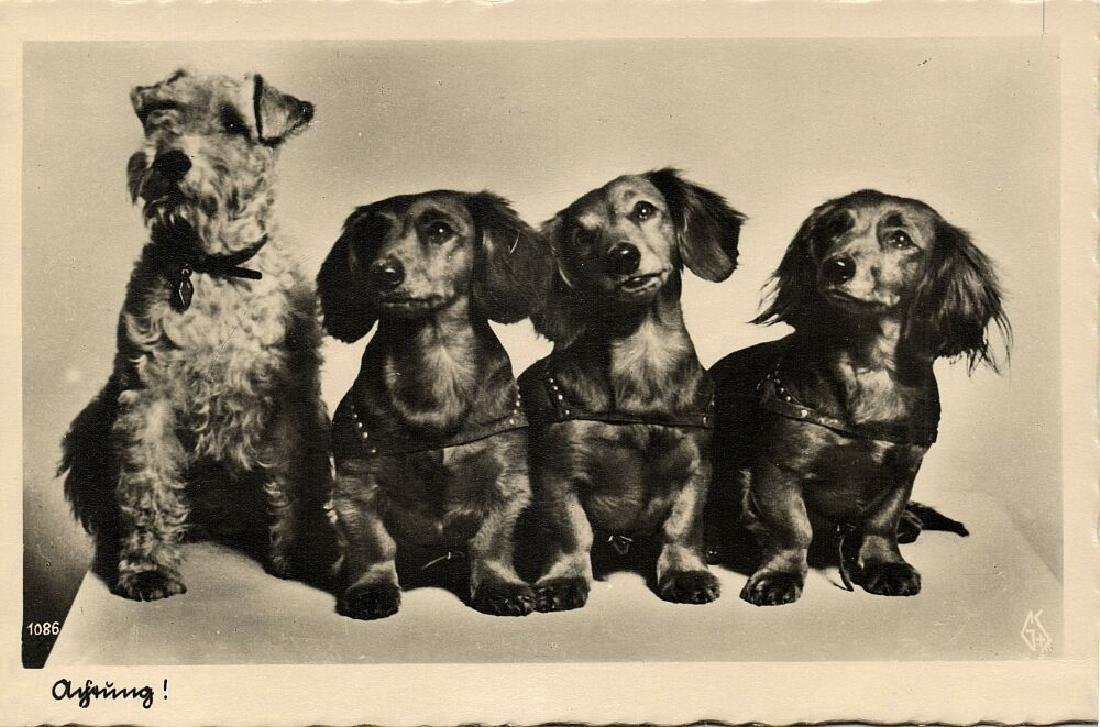 Lot of 10 RPPC Postcards of Dogs 1940s - 9
