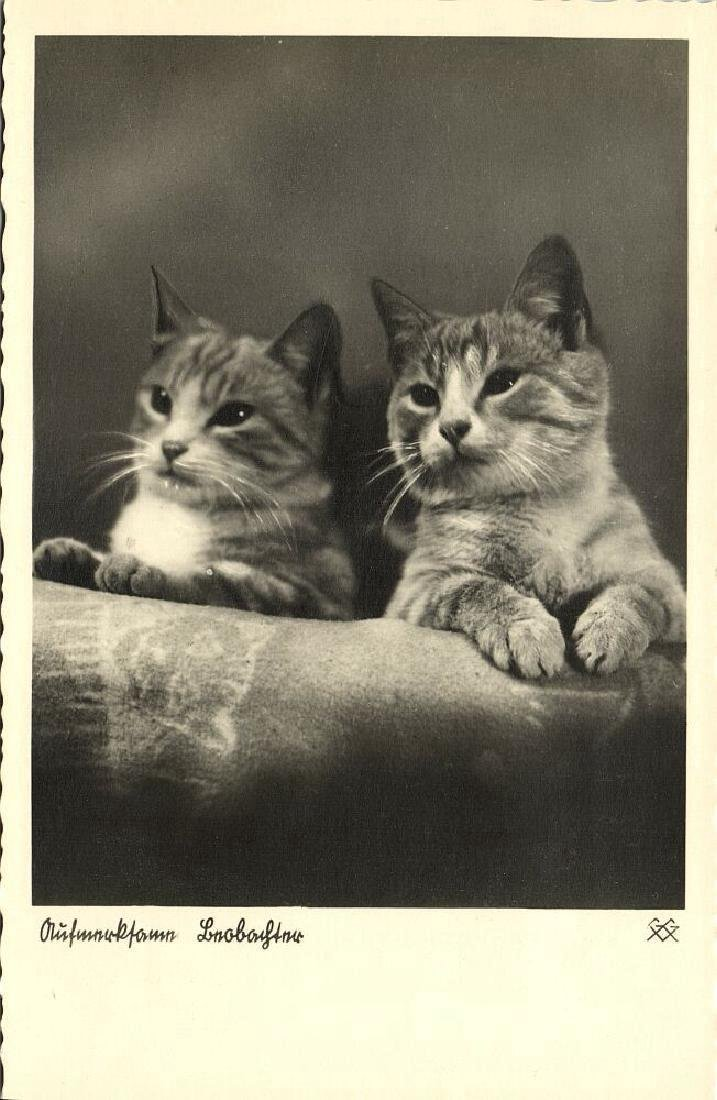 Lot of 9 RPPC Postcards of Cats 1940s - 10