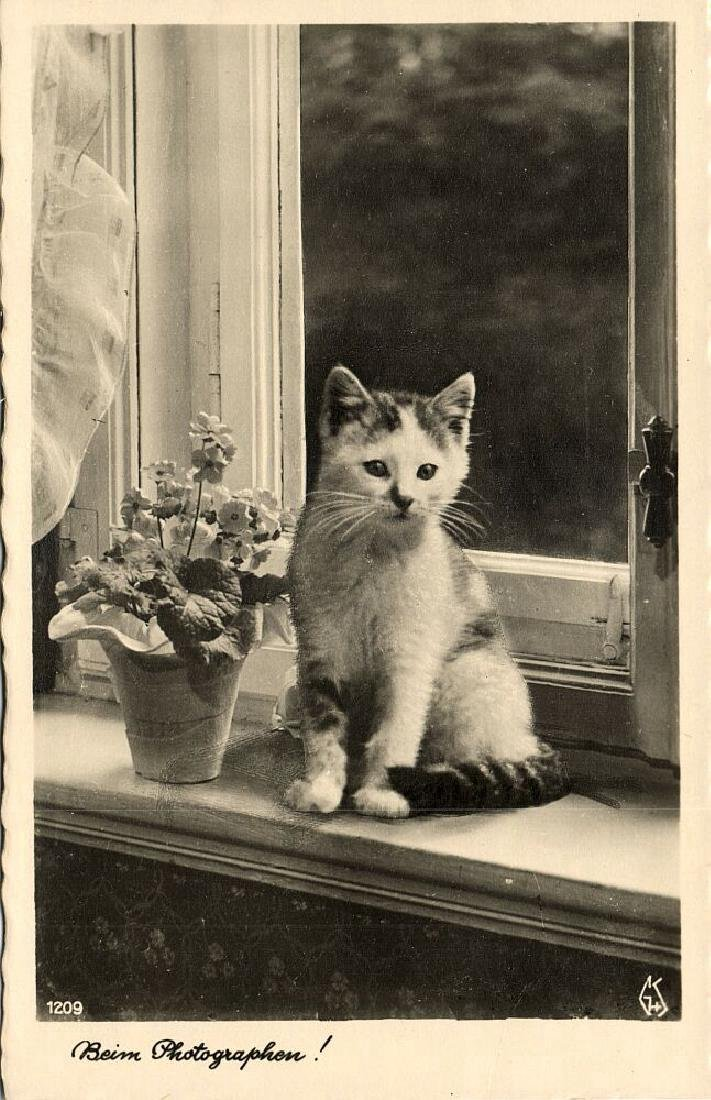 Lot of 9 RPPC Postcards of Cats 1940s