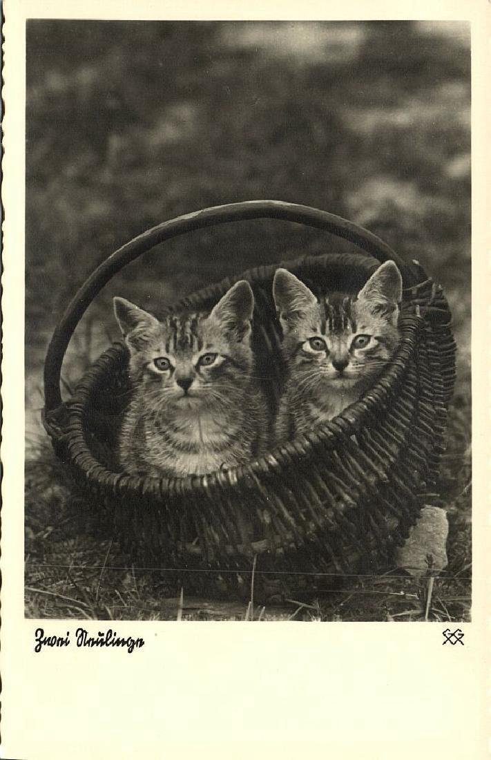 Lot of 9 RPPC Postcards of Cats 1940s - 3