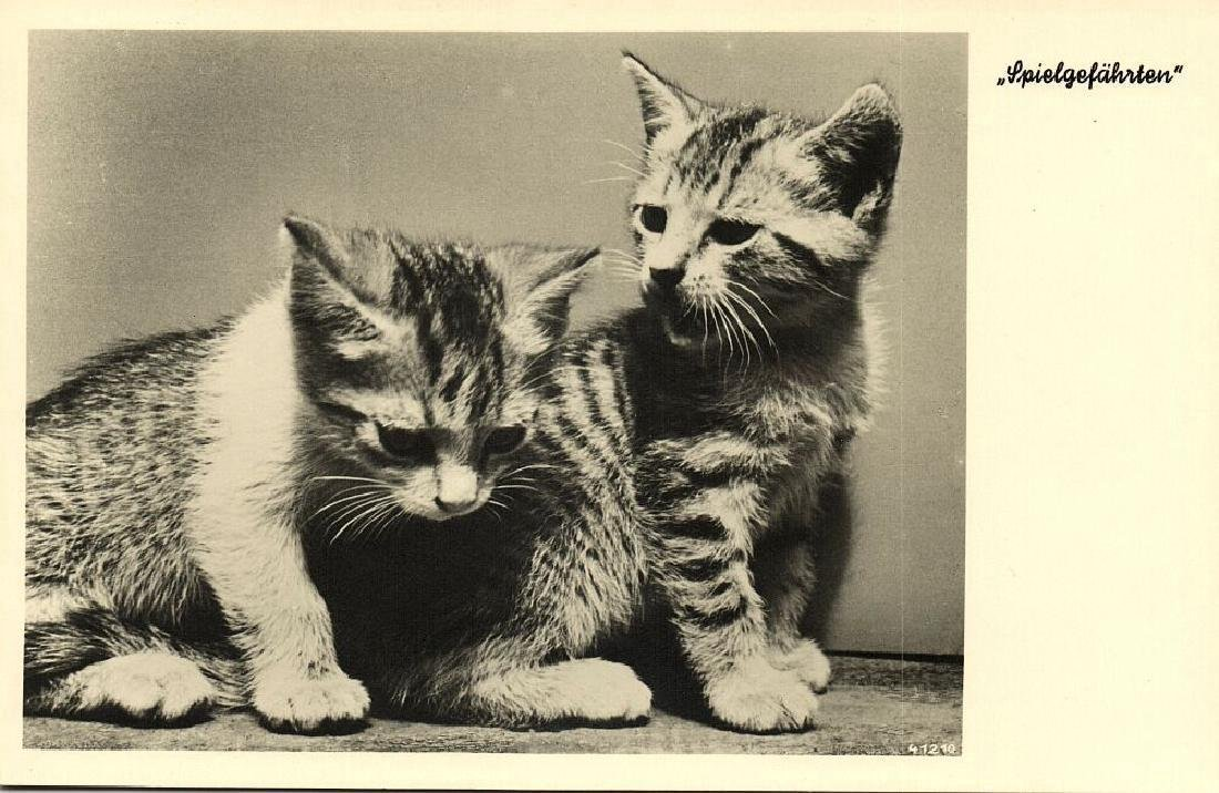 Lot of 9 RPPC Postcards of Cats 1940s - 4