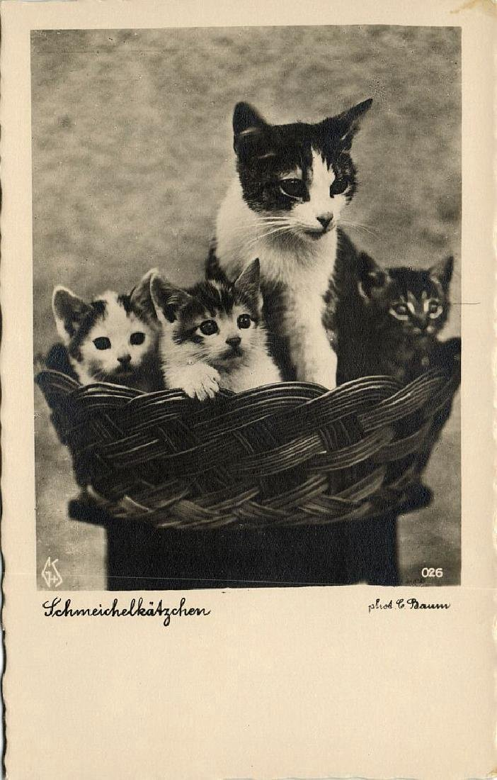 Lot of 9 RPPC Postcards of Cats 1940s - 5