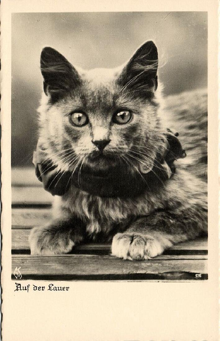 Lot of 9 RPPC Postcards of Cats 1940s - 6