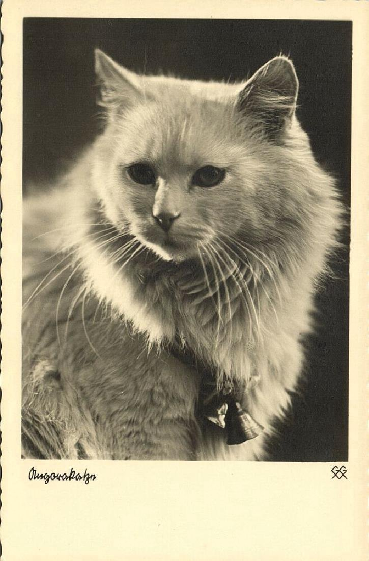 Lot of 9 RPPC Postcards of Cats 1940s - 8