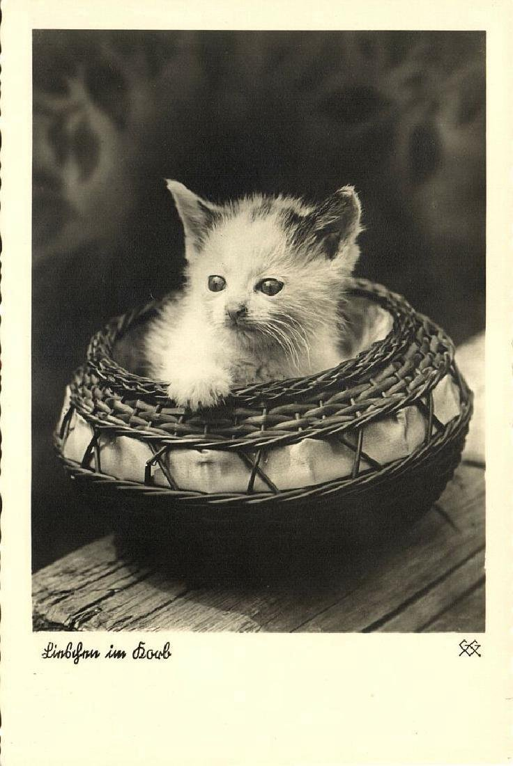 Lot of 9 RPPC Postcards of Cats 1940s - 9