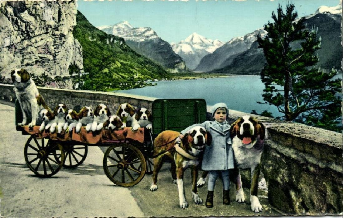 Lot of 8 Postcards of Dog Cart, Working Dogs - 10