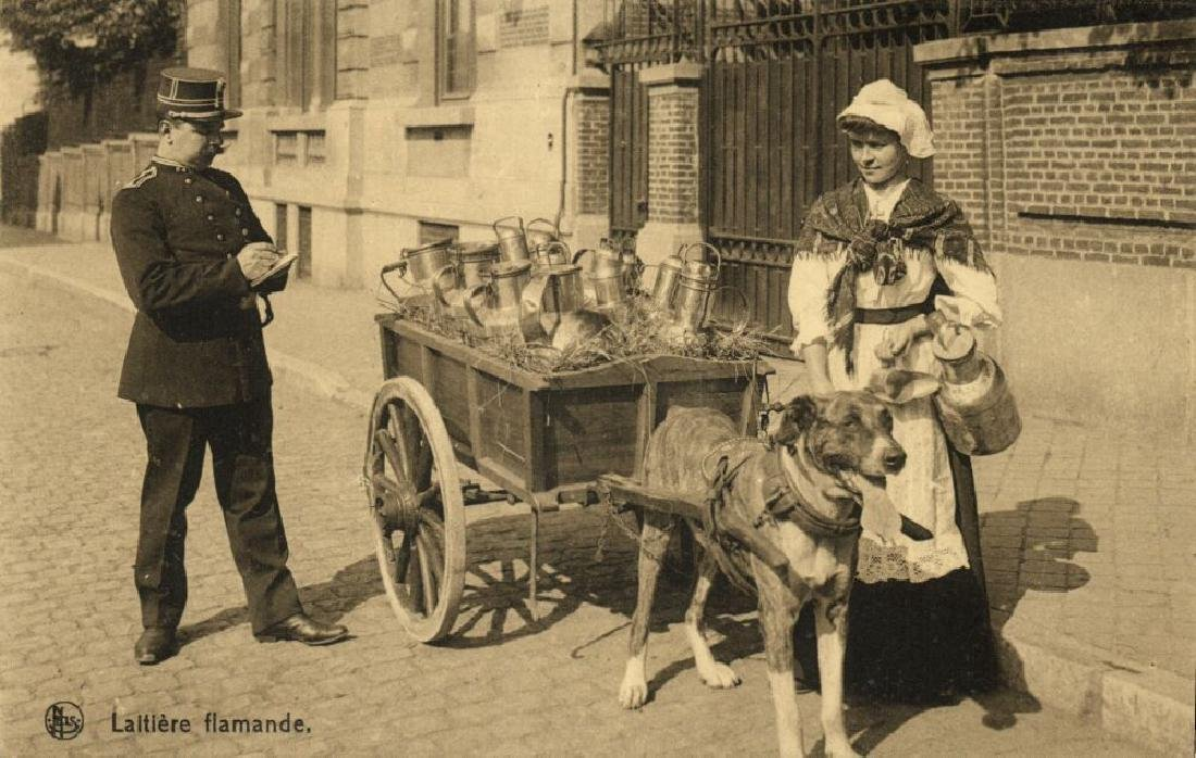 Lot of 8 Postcards of Dog Cart, Working Dogs